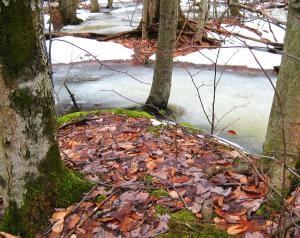 Ithaca, NY, Sapsucker Woods