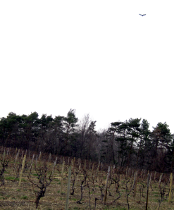 Canadaigua Lake vineyard view