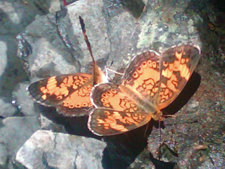 Butterflies at Staghorn Point