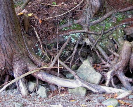 trees along the edge of Canadice lake