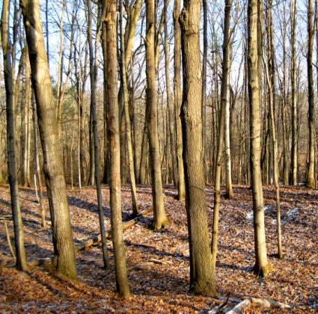 Sunny Woods = Sunyea