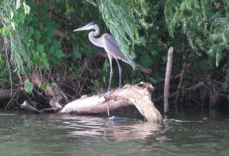 Ellyson Park wetlands